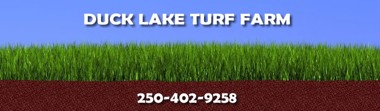 duck lake turf